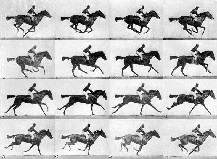 muybridge_race_horse_gallop1